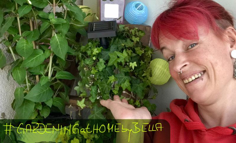 Unsere grüne Oase zu Hause